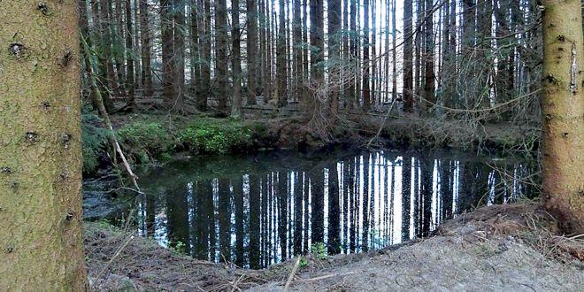 Löschwasserteiche im Nationalpark